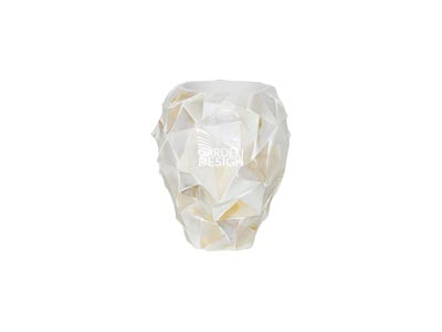 SEASHELL ORCHIDEE (White)